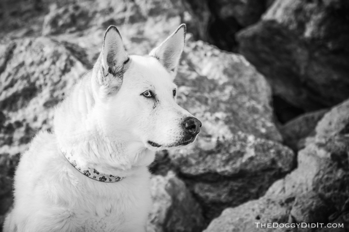 pet-photography-erin-on-6578