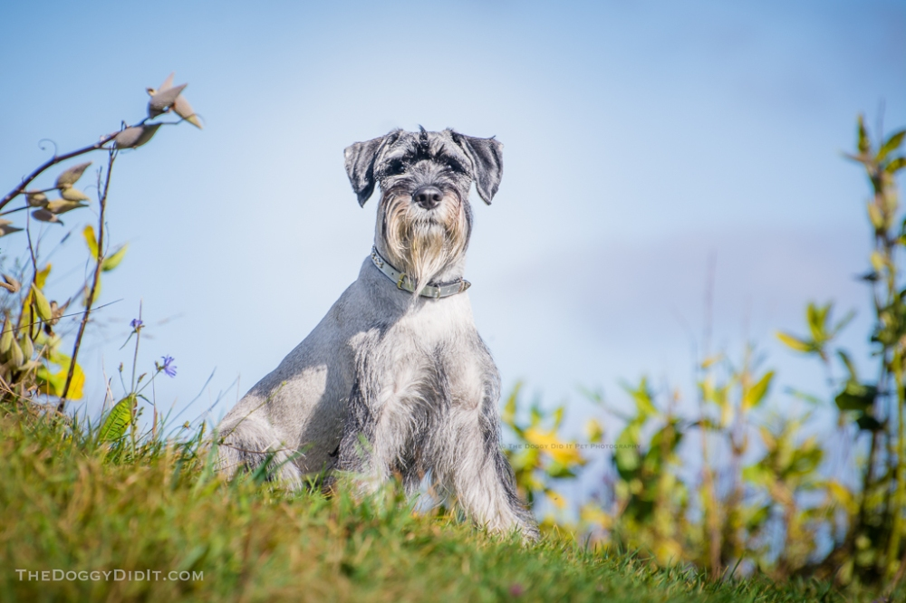 Pet Photography Erin ON-